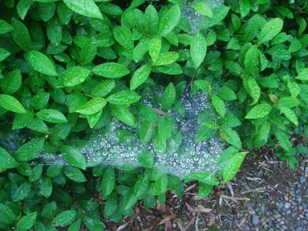 2010.6.16クモの巣