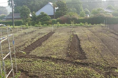 2010.6.5植えたてのちば丸