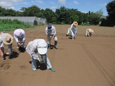 2010.7.18大豆の種をまく
