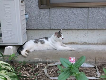 2010.7.19猫のごんた