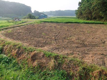2010.7.23 八反目の畑