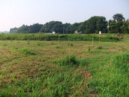 2010.7.23 梨緒の蜜柑園