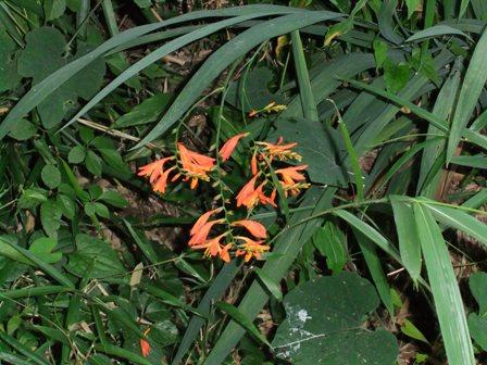 2010.7.15庭先の花