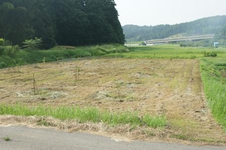 2010.8.1もも園除草