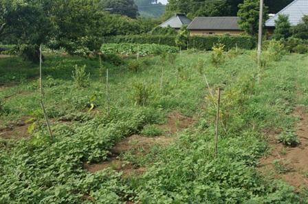 2010.8.1ブルーベリー園
