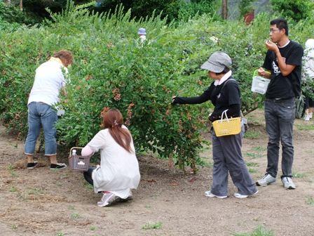 2010.8.7,8 のらりくらりのブルーベリー狩り