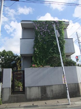 2010.9.1 文京で見た朝顔013