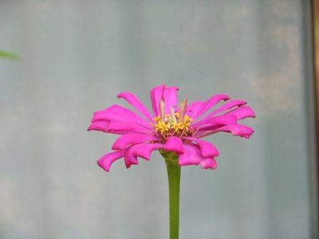 2010.9.1 秋の庭に咲く赤花 011