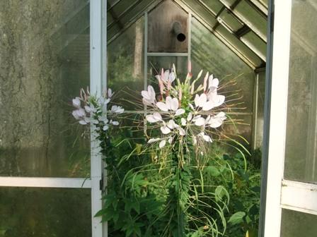 2010.9.1 秋の温室に咲く花 007