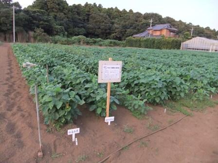 2010.9.5 大豆畑 010