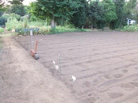 2010.9.2 秋のそば畑 009