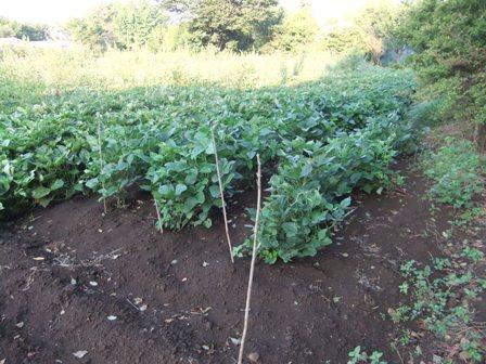 2010.9.11 大岩さんの畑 016