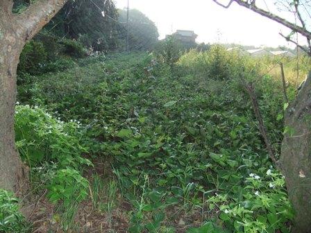 2010.9.11 遠山さんの畑 015