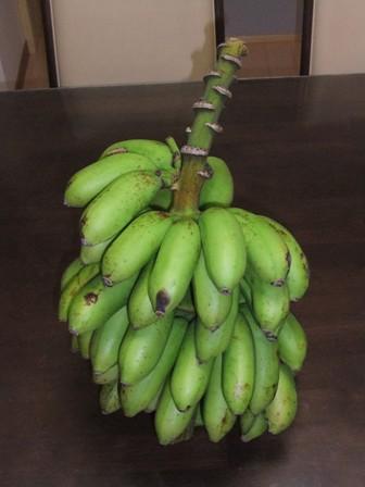 2010.9.11 青いバナナ 043