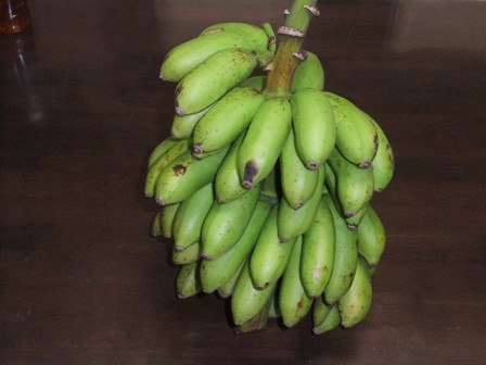 2010.9.13 吉原さんからのバナナ042