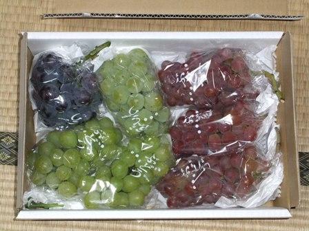 2010.9.12 みやちゃんからのぶどう 041