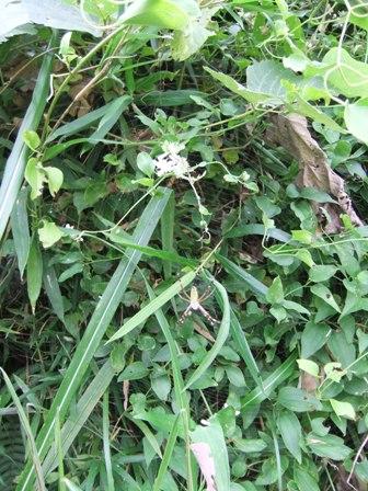 2010.9.15 クモの巣006