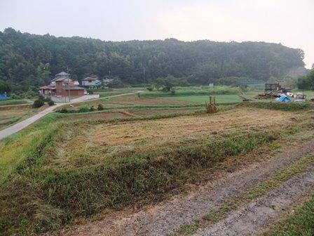 2010.9.21草刈後の水仙畑 019
