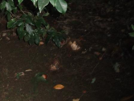 2010.10.7自宅周辺の秋 011