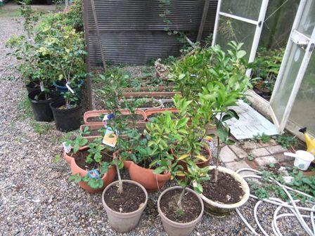2010.10.23秋の花壇整理 002