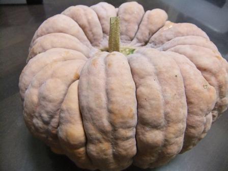 2010.11.5大きなかぼちゃ