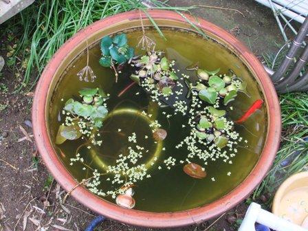 2010.11.23満員の金魚鉢