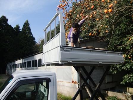 2010.11.28柿の収穫 017