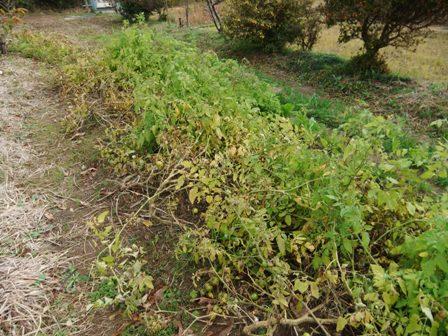 2010.12.5冬のトマト