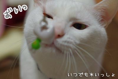 toro246