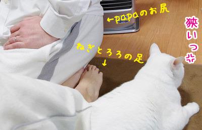 toro292