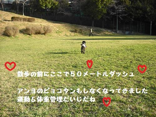 CIMG6733.jpg