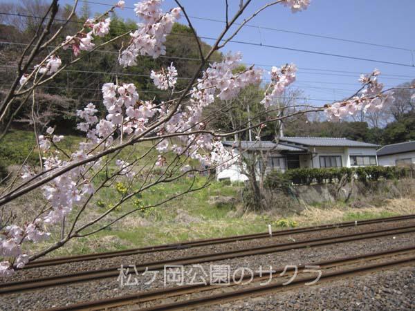 松ヶ岡03