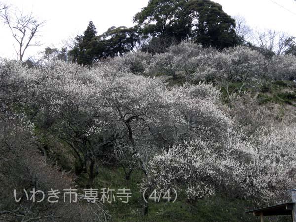 専称寺0404_1