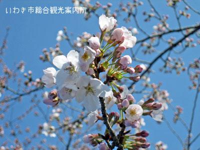 9日松ヶ岡公園1