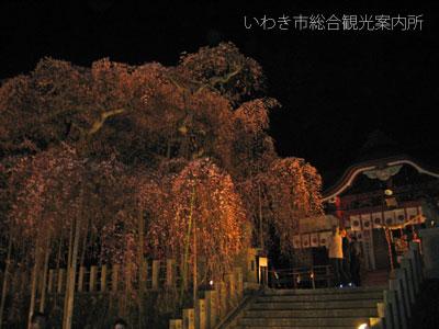 4月9日小川諏訪ライトアップ