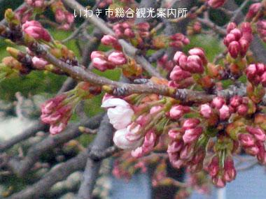 4月10日小名浜測候所2