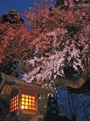 4月12日三島八幡神社