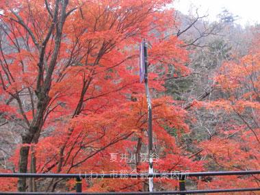 11月27日夏井川渓谷