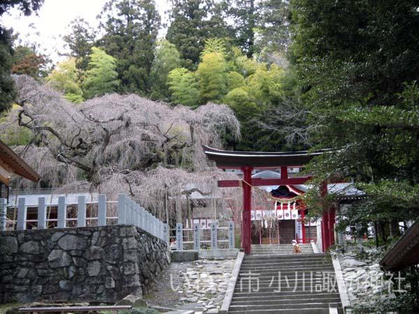 小川諏訪神社0404_2