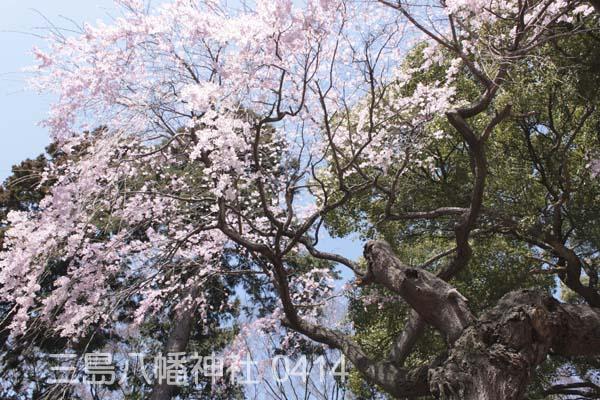 三島八幡3