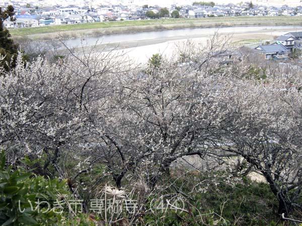 専称寺0404_5