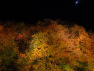 夏井川ライトアップ6