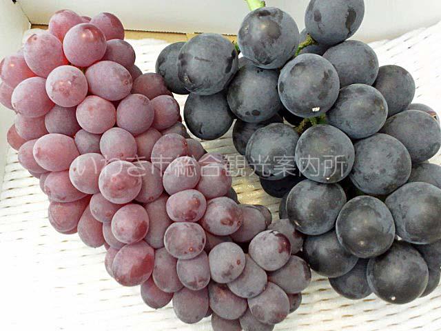 葡萄の里のブドウ