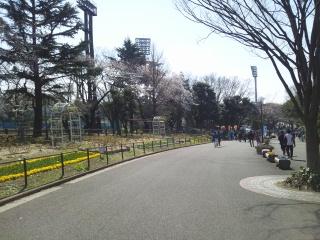 桜咲く三ツ沢の丘 今日こそ…