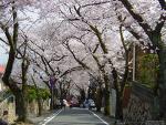 神戸桜トンネル