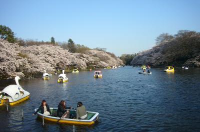 井の頭公園4