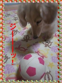 CIMG29511.jpg