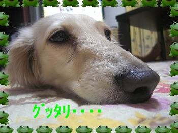 CIMG295711.jpg