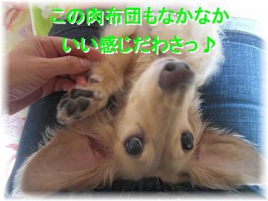 CIMG33981.jpg