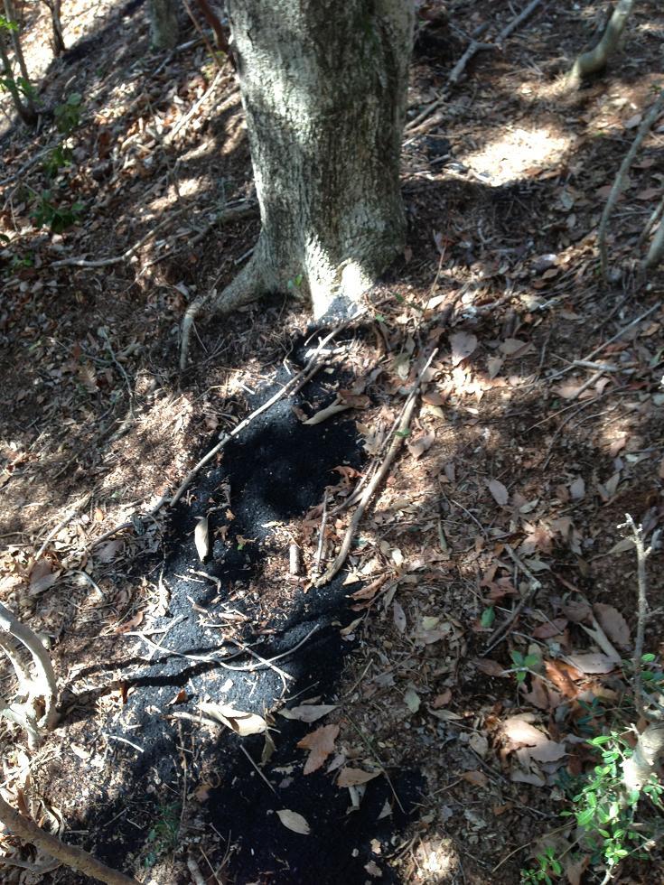 木の根元へ炭